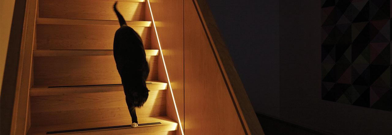 Katze geht Treppe mit Lightstrip herunter
