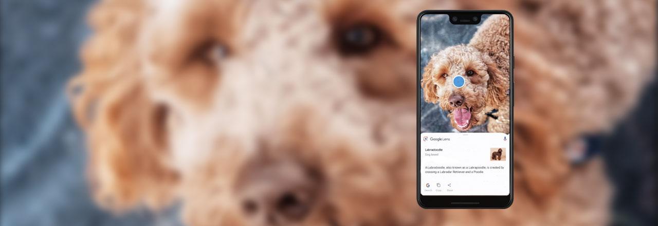 Google Pixel mit geöffnetem Foto von einem Hund